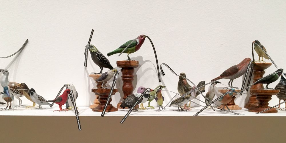 birds-horizontal